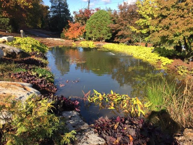 Arboretum_pond_Alice_2017-10